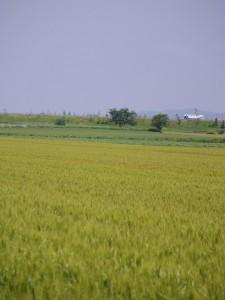 千歳 平井さんの畑